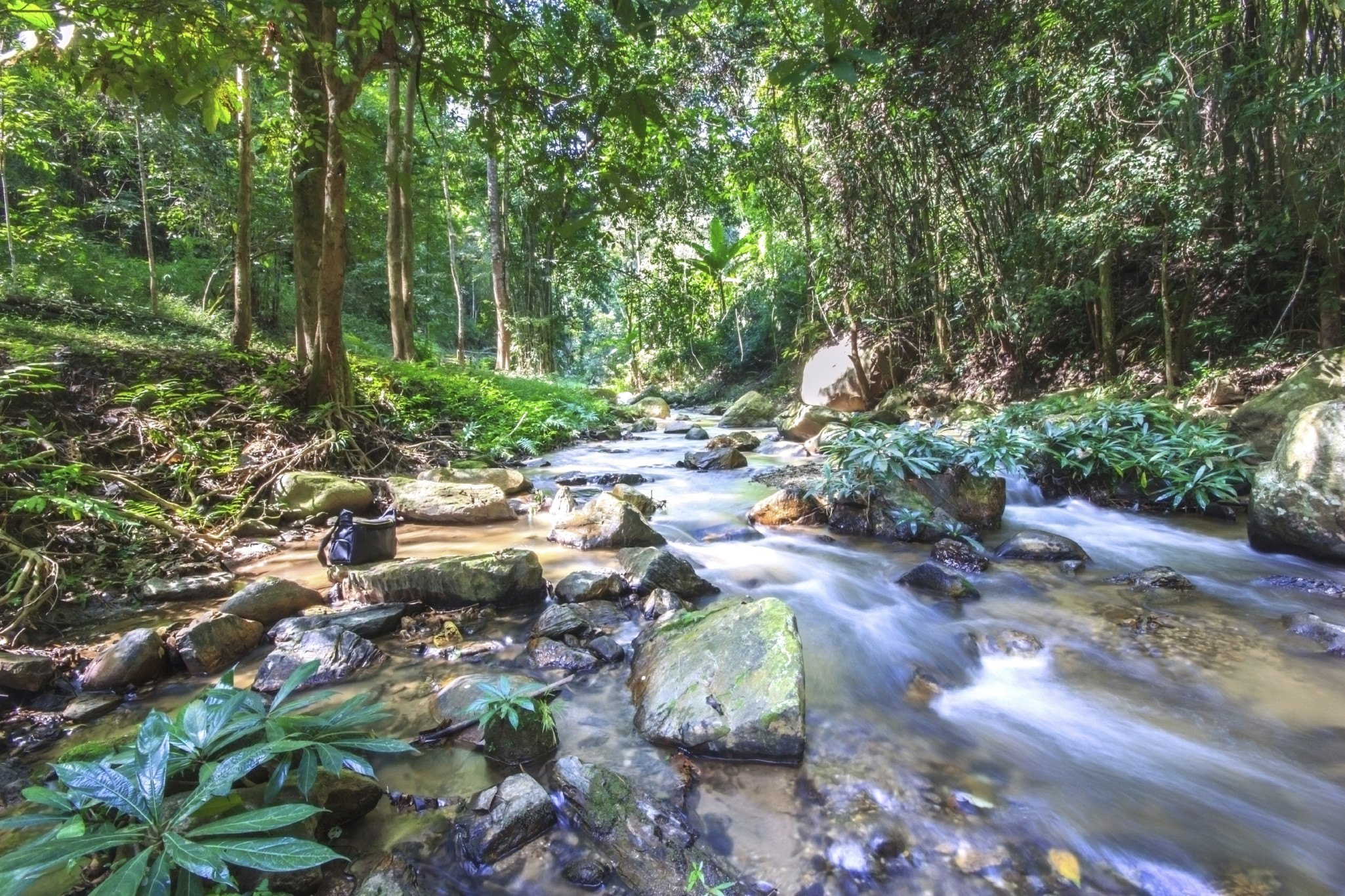 Streams in the tropical rainforest