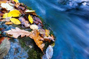 autumn leafs near mountain stream
