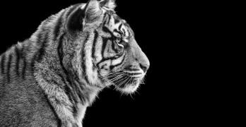 Pema Chödrön on Tigers, Strawberries and the Preciousness of the Moment