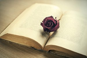 Open old book with dried maroon rose bud.
